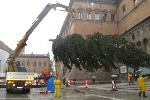 albero-natale-posaFB95E232-EB61-72C0-3E4C-07AC62D375F2.jpg