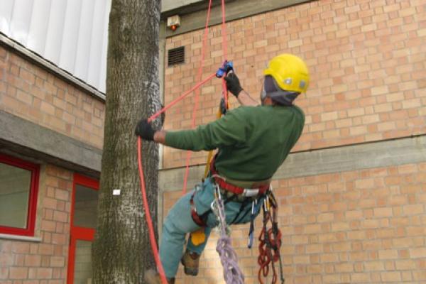 tree-climbing-121470D41-EB57-CA42-4186-5A6AB6CE8A56.jpg